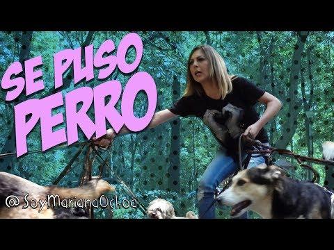 Paseando perros FT . Mariana Ochoa