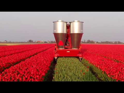 World Amazing Modern Agriculture Equipment Mega Machines Harvesting Topping Tulips Latest Technology