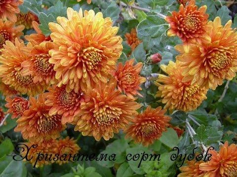 Обои цветы 1366х768 для рабочего стола