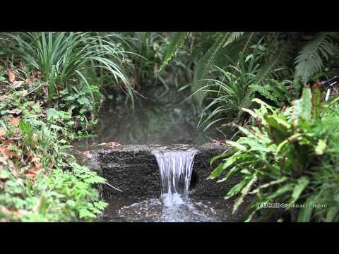 Relaxing Sounds of a Flowing Stream, suoni rilassanti della natura Acufeni terapia