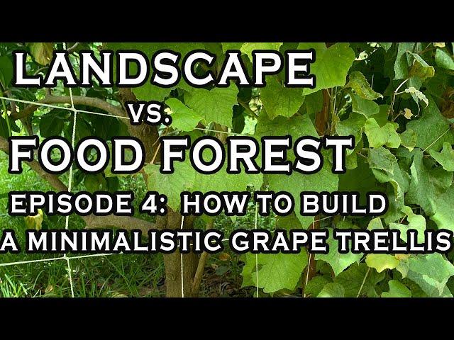 5 min installation! Landscape vs Food Forest Episode 4: A Simple Cheap Handsome Minimalistic Trellis