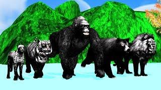 Black cat animals finger family song for kids,Gorilla,3d rhymes,Lion,Tiger,cheetha,arcusn media kidz