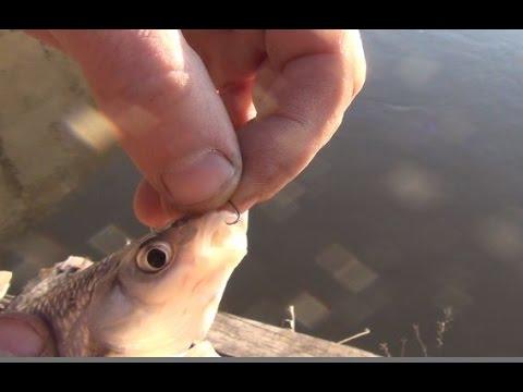 рыбалка в красноярском крае на ельца
