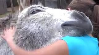 Zwierzęta kochają ludzi