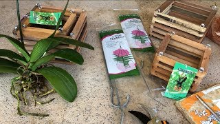 How to Repot Phalaenopsis Orchids, Step by Step, Beginner Orchid Care