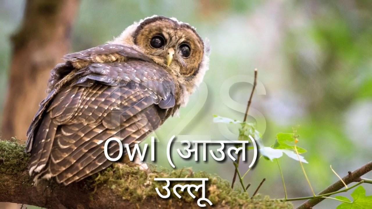 Birds Name Hindi And English With Image Youtube