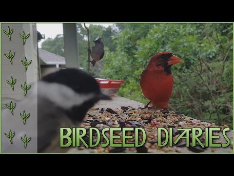 Bird Seed Rush! So Many Birds!! || Birdseed Diaries: Wild Birds!