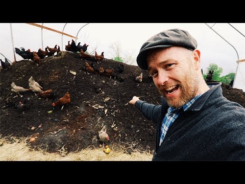 How Karl Hammer Feeds 600 Chickens (Without Grains)