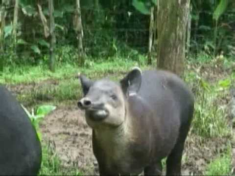 ANIMAL RESCUE CENTER & ZOO COSTA RICA VOLUNTEER