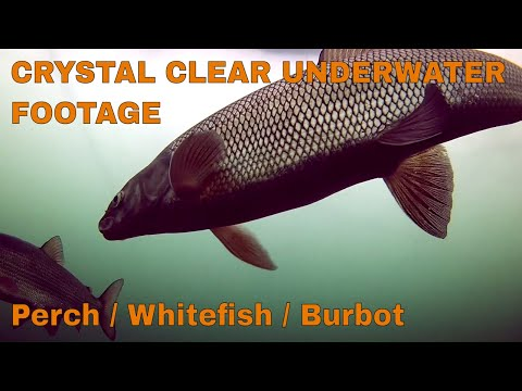 Amazing Underwater Footage While Ice fishing - ft Chris Bulaw
