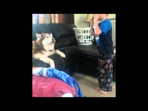 Husky Sings Along To Harmonica