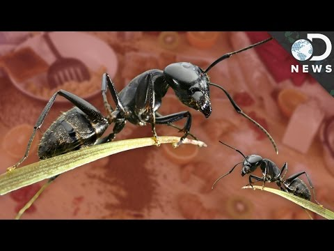 Ants Are Space Exploring, Junk-Food Eating Anarchists