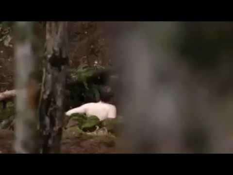 Camino Hacia El Terror 6 Trailer oficial: Herencia de muerteиз YouTube · Длительность: 2 мин16 с