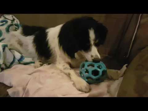 Chester und der Hol-ee Roller Gitterball