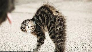 Как разнять драку, интересное видео про животных