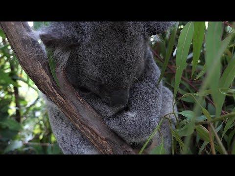 Koala Park Sydney