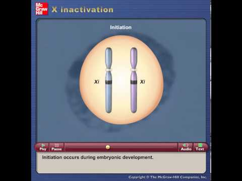 3 X inactivation human detailed