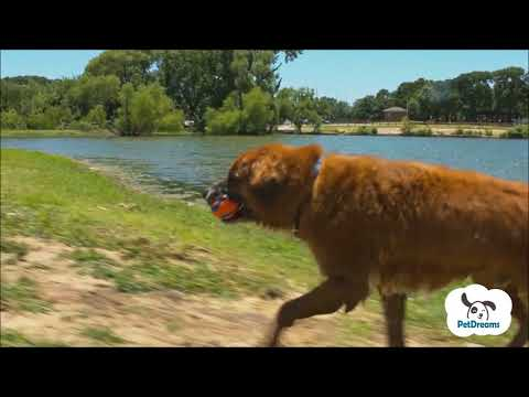 Chuckit Ultra Ball hundelegetøj