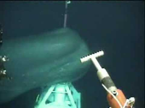 Big whale came very close under a ROV operation!