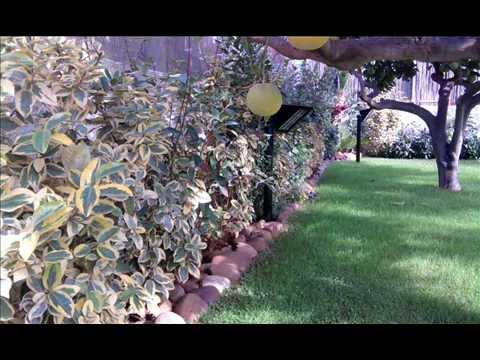 giardino con prato e piante wmv youtube On cerco piante da giardino