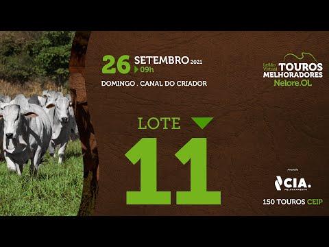 LOTE 11 - LEILÃO VIRTUAL DE TOUROS 2021 NELORE OL - CEIP