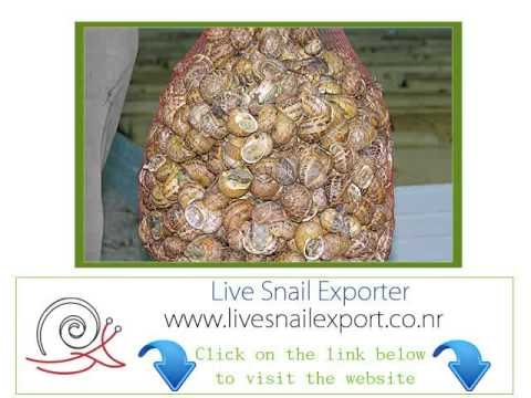 importer wholesale suppliers live snail uk united kingdom