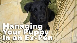 Managing Your Puppy In An Expen