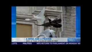 Pope Releases Peace Doves, Which Are Promptly Attacked by Meaner Birds thumbnail