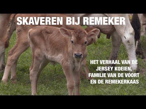 Skaveren in Gelderland bij boerderij Remeker