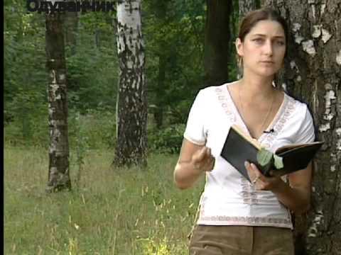 Лекарственные травы.Цикорий и Одуванчик