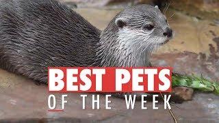 Best Pets of the Week | December 2017 Week 4