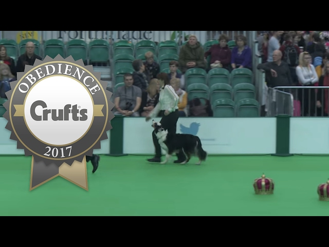 Obedience Championship - Bitches - Part 12 | Crufts 2017