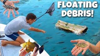 Netting WILD AQUARIUM Fish Off Floating DEBRIS!!