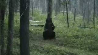 Dancing bear with great moves