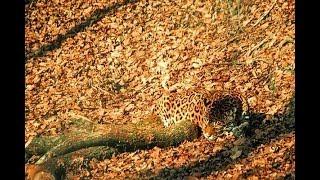 Замаскировался! Удивительные особенности маскировки животных в своей среде обитания
