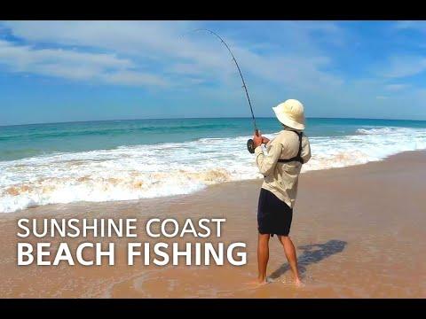 Mixed Bag Of Tailor, Bream & Dart  - Surf Beach Fishing At Kawana Waters, Sunshine Coast