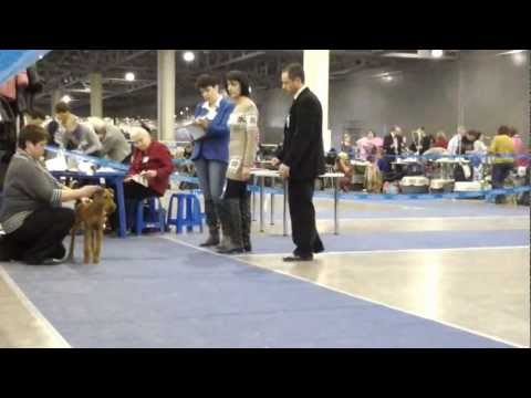 24 марта    International Dog Show Eurasia-2 CACIB-FCI