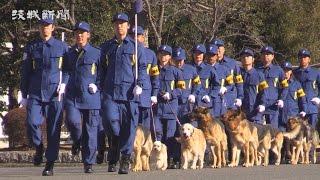 新年を迎え警察官の士気高揚を図ろうと、県警恒例の視閲式が13日、茨城...