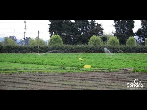 VIDEO LA CORSARIA Fresh Herbs Company FHD
