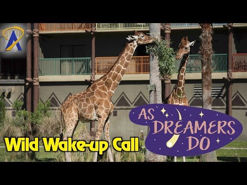 As Dreamers Do - 'Wild Wake-up Call at Animal Kingdom Lodge' - Aug. 16, 2017