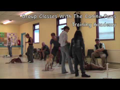 Beginner's Basic Obedience Class