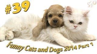 Кошки и Собаки март 2014 #1