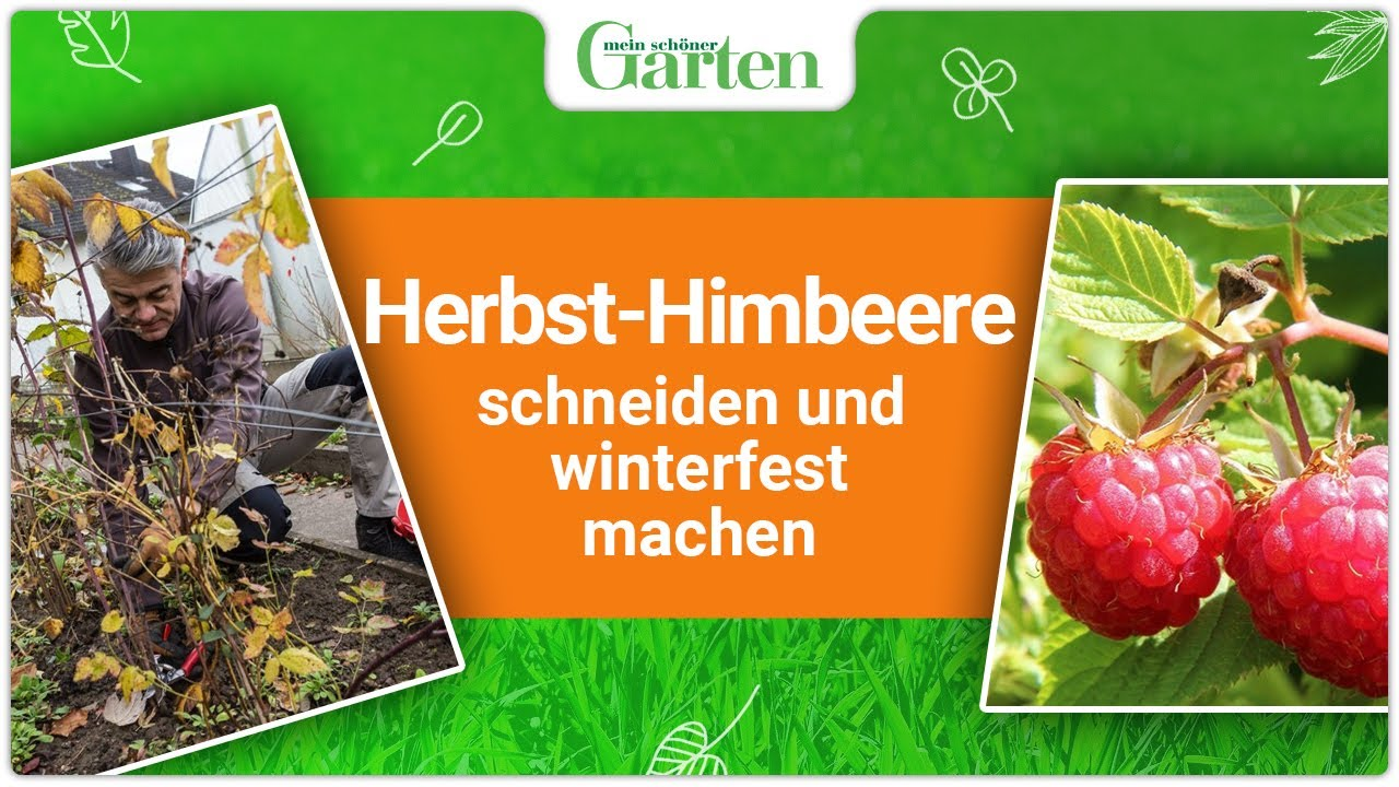 gartentipp herbst himbeeren schneiden und winterfest machen youtube. Black Bedroom Furniture Sets. Home Design Ideas