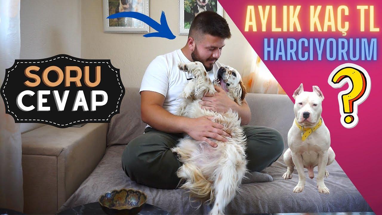 TYSON'I ALMAYA ÇALIŞTILAR TARTIŞTIK!! - BEKLENEN SORU CEVAP 😮