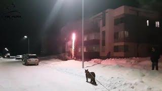 Пумы любят фейерверк! Cougars love fireworks too
