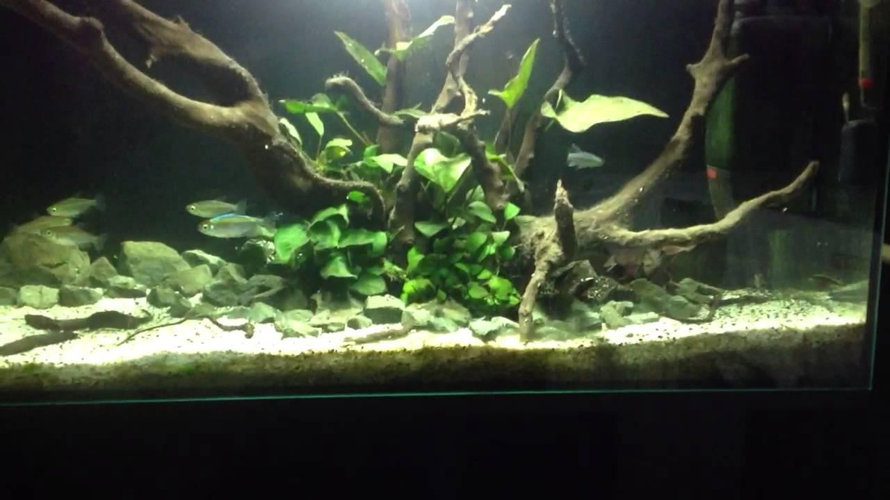 2015 Latest small Aquarium mini USB mini aquarium fish
