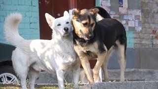 У Житомирі почали рахувати безпритульних собак