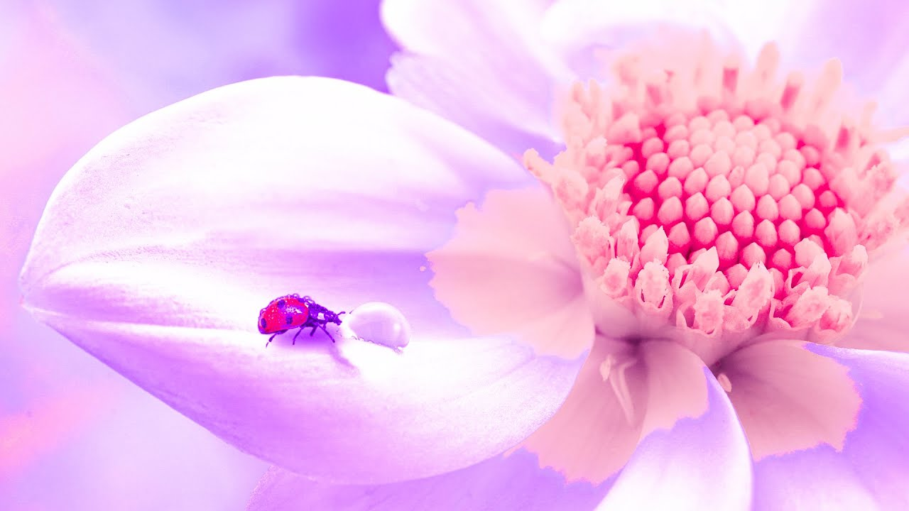 Download Spiritual Awakening | 432Hz Music For Meditation | Detox Your Heart | Positive Healing Frequency