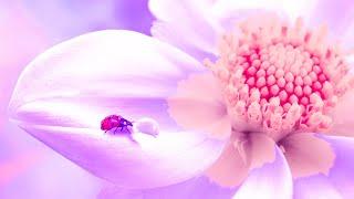 Spiritual Awakening | 432Hz Music For Meditation | Detox Your Heart | Positive Healing Frequency