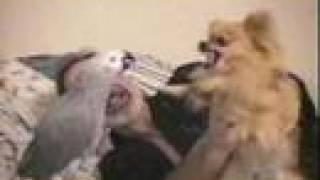 צחוקים עם בעלי חיים